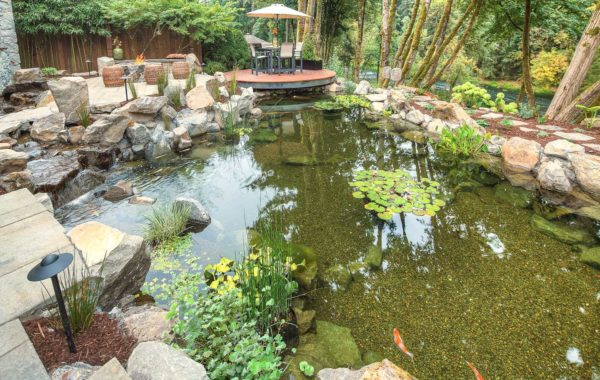 koi pond in landscape