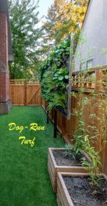 Dog-Run - turf