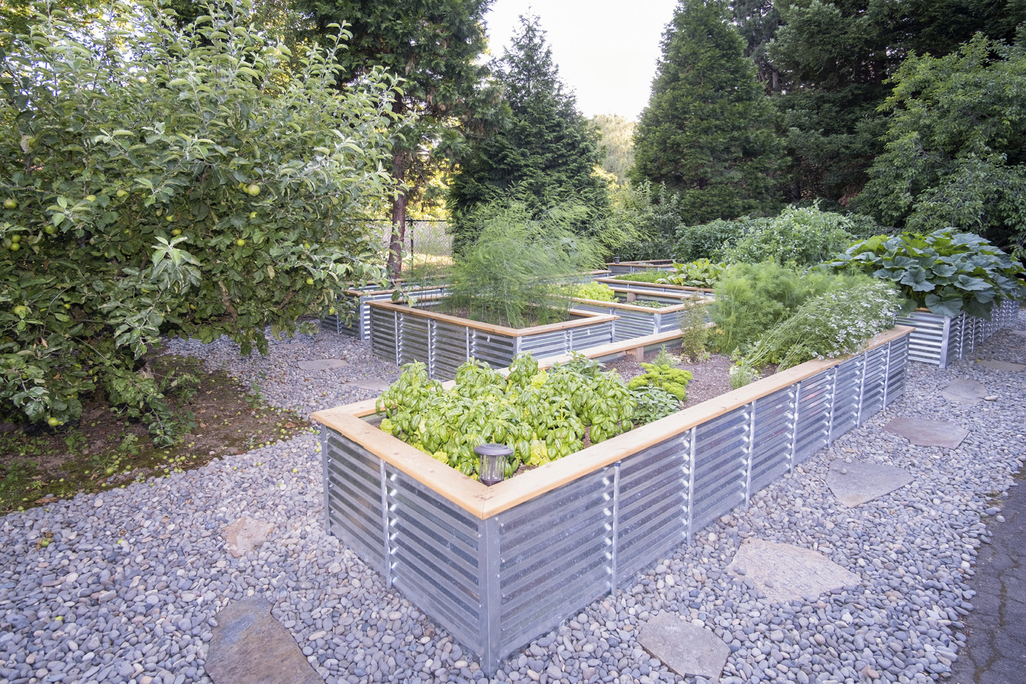 Planter Box Plantings - Raised Beds